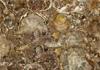 木化石宝石